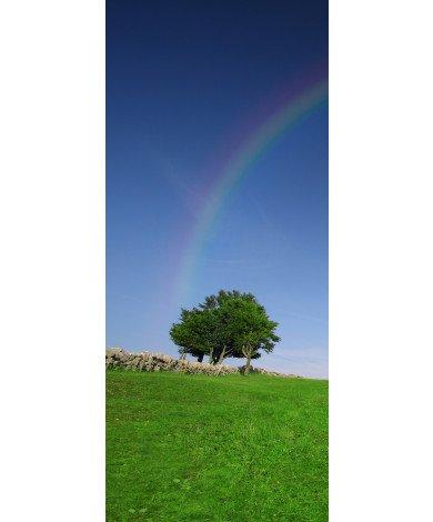 Boom met regenboog