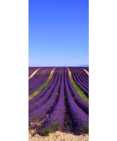 Lavendelstroken