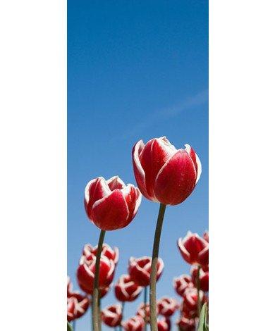 Tulpenveldje